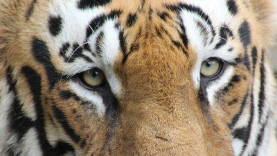 Исследователи научились видеть мир глазами животных