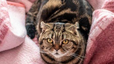 Уже 6 лет жене приходится соперничать за внимание супруга. С домашним котом!