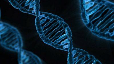 Учёные обнаружили сеть генов, связанных с алкоголизмом