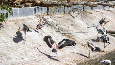 Зоопарк в Ченнае, Индия. Часть 2