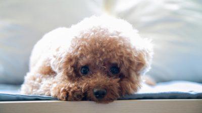 Измождённый пёс голодал так долго, что разучился есть. Его спасли, приласкали и окружили любовью