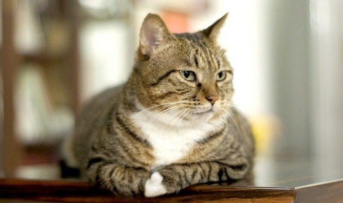 china chinchilla 1974957 960 720 700x400 676x400 1 - (Видео) Программист смастерил для кошек приют, который распознаёт морды животных и их заболевания