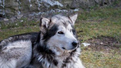 Смертельно больную собаку ждало усыпление, и хозяйка решила сделать ей последний подарок