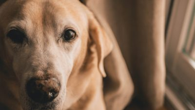 Собака позвонила в службу спасения. И это не ошибка!