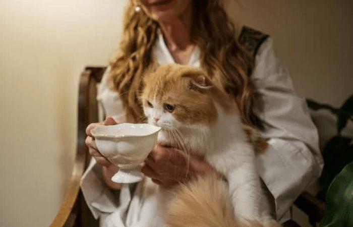 Кошка. Фото:  pexels.com/ru-ru/@cottonbro | Epoch Times Россия