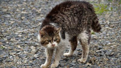 (Видео) Отважный кот спас ребёнка от нападения бродячей собаки