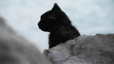 Кот не знал, что в приют его определили на время, и сбежал. Следующая встреча с хозяйкой состоялась аж через 8 лет!