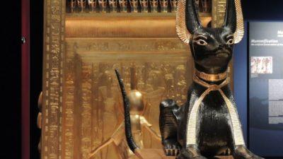 Проклятие египетской гробницы лишило мужчину кошачьего расположения. Теперь животные обходят его стороной