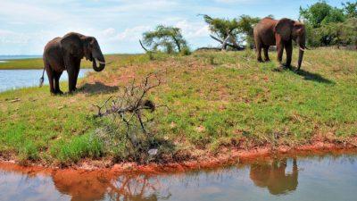 В Зимбабве снят запрет на охоту на диких животных