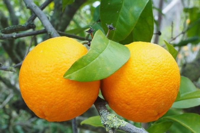 Врождённая человеческая природа добра. Подаренный апельсин привёл к необыкновенному изменению ситуации, которая могла бы закончиться трагически. Фото: Hans Braxmeier/pixabay.com/Pixabay License | Epoch Times Россия