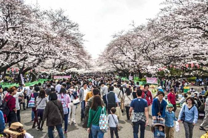 Сакура расцвела в японском парке Уэно в Токио 29 марта 2014 года. Фото: Keith Tsuji/Getty Images | Epoch Times Россия