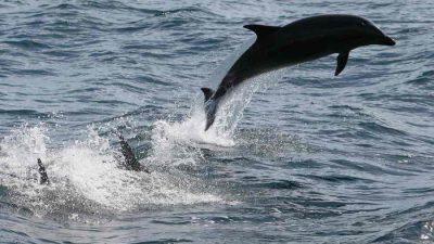 Боевики ХАМАС поймали израильского дельфина-шпиона