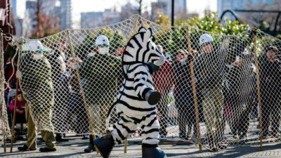 Токио: в зоопарке ловили сбежавшего «снежного барса»