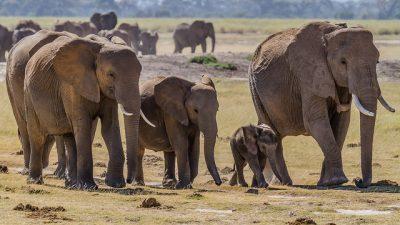 Слонёнок упал в колодец. Смекалка жителей деревни помогла спасти его