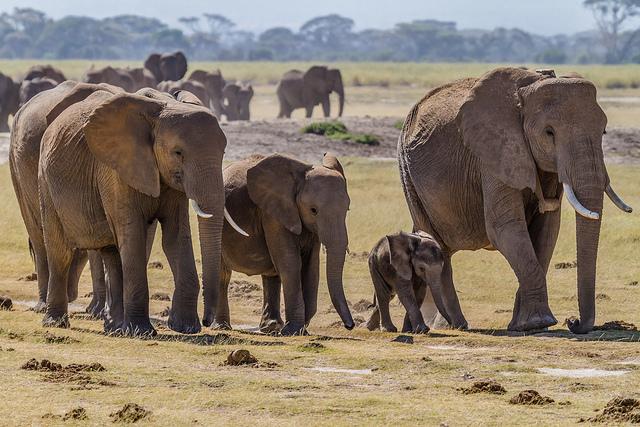 Эту семью слонов сняли на 360-градусное видео. Фото: Benh LIEU SONG via flickr/CC BY-SA 2.0   Epoch Times Россия