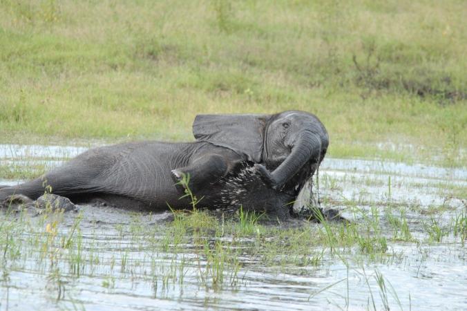 Кенийцы спасли тонущего слона с помощью экскаватора