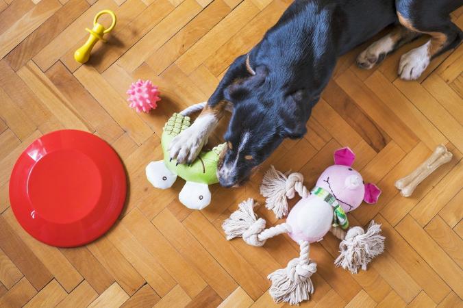 (Видео) Собакам из приюта позволили самим выбрать игрушки. Неприкрытое счастье сняли на камеру