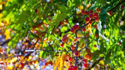 Лесные плоды могут помочь преодолеть дефицит микроэлементов