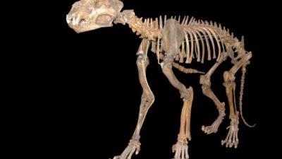 В вечной мерзлоте Якутии обнаружили отлично сохранившиеся останки двух пещерных львят