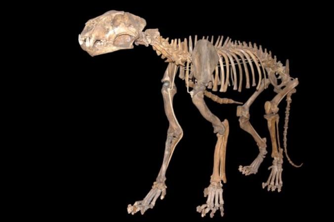 glm 950x550 676x450 1 - В вечной мерзлоте Якутии обнаружили отлично сохранившиеся останки двух пещерных львят