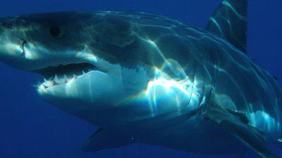Останки гигантской акулы, обитавшей 300 миллионов лет назад, найдены в Техасе