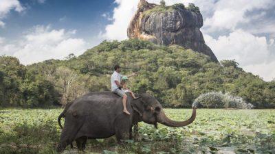 Что изменится, если слоны исчезнут?