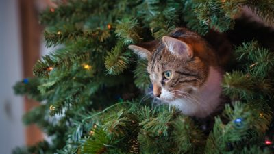 (Видео) Коты облюбовали городскую новогоднюю ёлку. Теперь ей стоять до лета на радость всем!