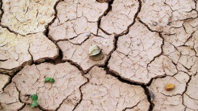 В Китае разразилась засуха