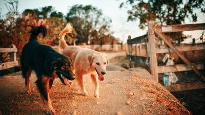 Китаянка спасла сотню собак от съедения