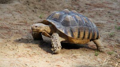 Редких черепах спасли от нелегальной продажи