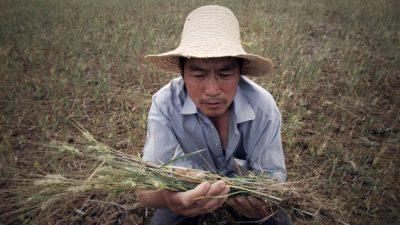 У Китая снижается способность обеспечивать себя своими продуктами