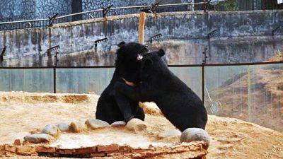 Китаец два года принимал своих медведей за собак