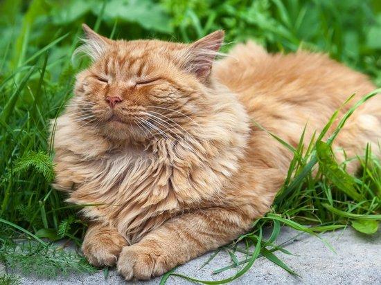 Рыжий кот. Фото: sovetnika.net | Epoch Times Россия
