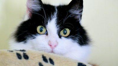 (Видео) Кот с парализованными лапами спешит встретить хозяина. И это высшая степень преданности!