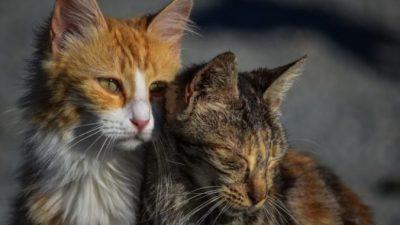 Российских кошек, оказавшихся запертыми в подвале, нужно спасать, думают жители и вызывают «Кэтмена»