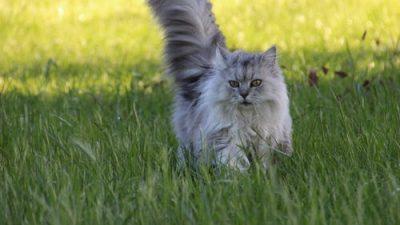 Пара приобрела неожиданных друзей по переписке, которую доставляет их кот-почтальон