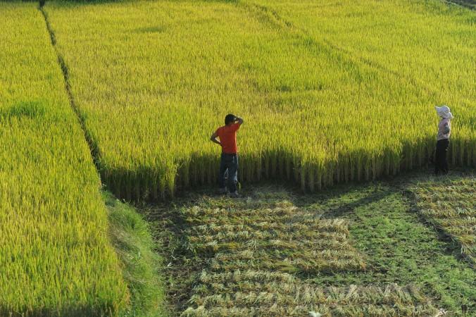 Китайские крестьяне оценивают  урожай на полях в Хэфэй, провинция Аньхуэй, 27 октября 2011 г. Фото: STR/AFP/GettyImages | Epoch Times Россия