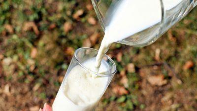 Польза и вред молока для человека. Так стоит ли его всё-таки пить?