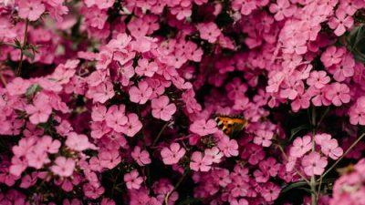 Около 2 млрд руб. потратят родители на цветы учителям 1 сентября. Фонд «Вера» призывает к участию в благотворительной акции «Дети вместо цветов»