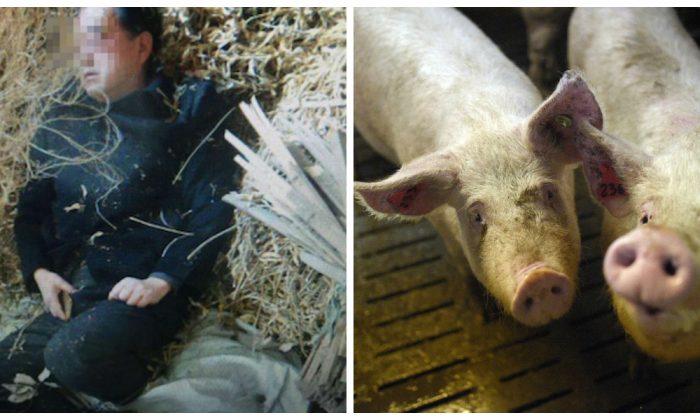 Фотография подозреваемого Тан, спящего в загоне для свиней после нападения, широко распространилась в китайском Интернете. (Weibo.com)   Epoch Times Россия