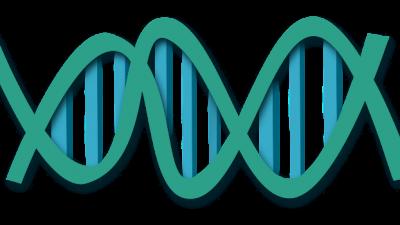 Эволюция генома человека — конкуренция организма с самим собой, считают учёные