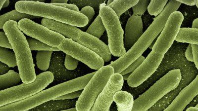 В сибирской мерзлоте обнаружен спящий гигантский вирус