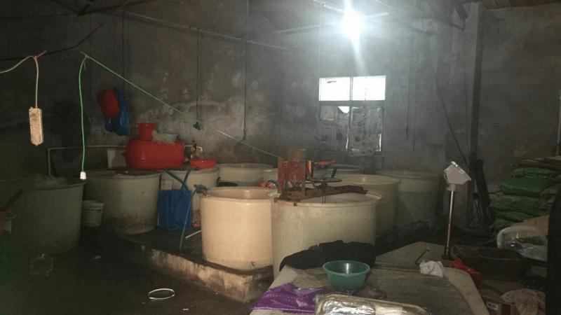 Китайцы научились подделывать медуз