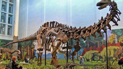 Самую крупную в мире кость динозавра выставили в музее аргентинского города Трелью