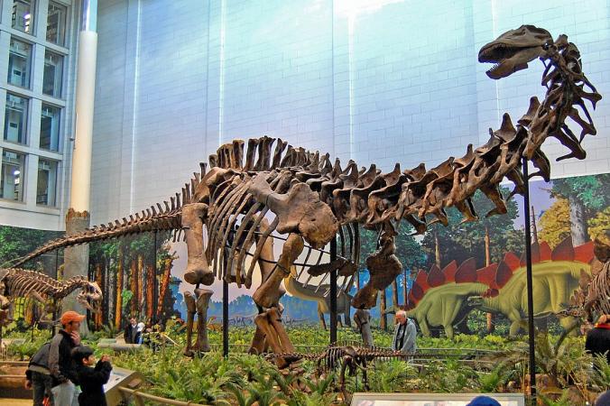 Tadek Kurpaski from London, Poland - sauropodUploaded by FunkMonk, CC BY 2.0, https://commons.wikimedia.org/w/index.php?curid=8698637   Epoch Times Россия