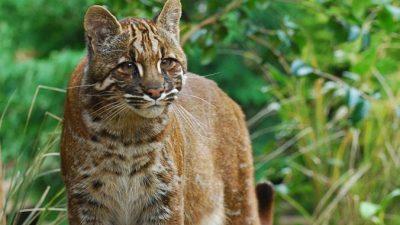 Устаревшие научные названия животных помогают китайским браконьерам безнаказанно убивать
