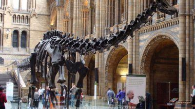 Ранее неизвестный вид динозавров нашли в Аргентине