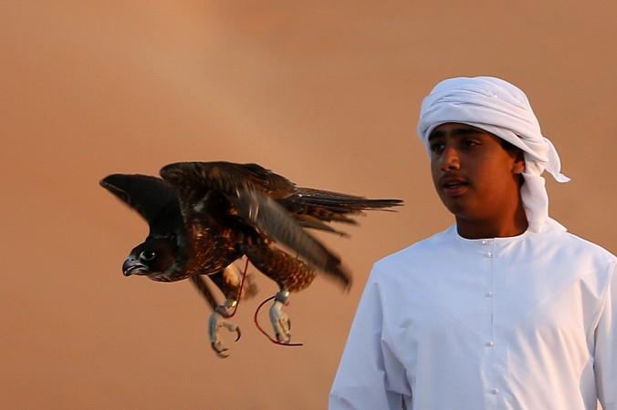 Владелец птиц Моххамед Бин Ракана Харвон Аль-Кубасси с его соколом в Лива на юго-западе от Абу-Даби, ОАЭ. Соколы в Абу-Даби традиционно используются для охоты. Фото: Karim Sahib/AFP/Getty Images   Epoch Times Россия