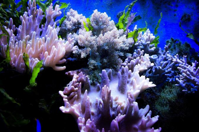 coral 2374984 1280 676x450 1 - Искусственные кораллы спасут рифы от разрушения из-за повышенной кислотности океана