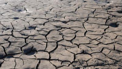 Засуха ведёт к вымиранию бабочек